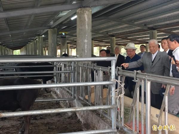 李登輝到兆豐農場牛舍瞭解牛隻生長情形。(記者花孟璟翻攝)