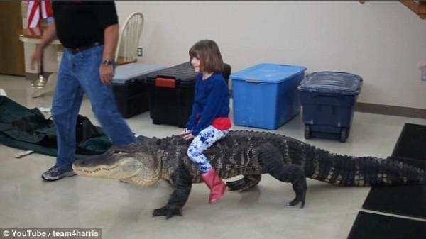 美國小女孩騎鱷魚的影片在網路上流傳,引發熱烈討論。(圖擷取自每日郵報)