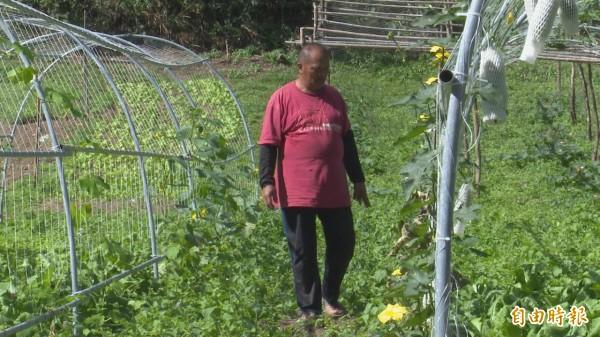 巡視農園察看農作生長,曙光農園員工個個不懈怠。(記者陳賢義攝)