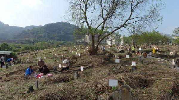 新店第一公墓遷葬前墓區凌亂。(新北市殯葬處提供)