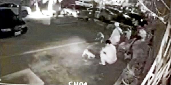 小狗吃到毒雞翅,10分鐘後5隻狗吐血死亡。 (記者陳文嬋翻攝)