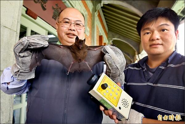 台師大生科系教授吳忠信團隊採集台灣各區蝙蝠,發現蝙蝠吃下有環境污染毒物如農藥及重金屬的昆蟲,破壞其中樞神經及回聲定位系統,導致無法覓食。(記者廖振輝攝)