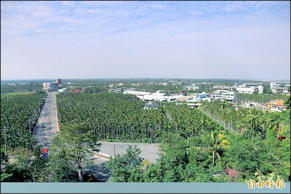 政府今年納入屏東地區的「平地檳榔」轉作輔導補助。(記者邱芷柔攝)