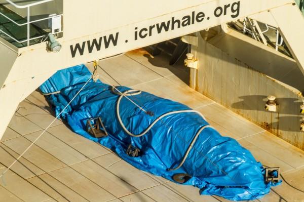 該船船員發現被偷拍,緊急將鯨魚用帆布蓋上。(法新社)