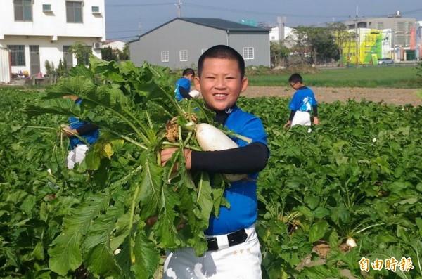 安慶棒球隊小球員體驗拔蘿蔔的樂趣,拔得的蘿蔔做為學校棒球隊的義賣品。(記者蔡文居攝)