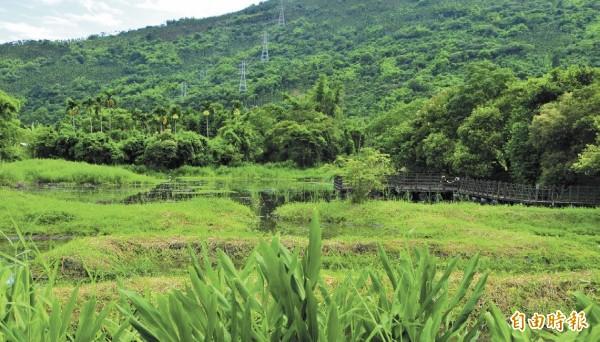 馬太鞍濕地綠意盎然。(記者花孟璟攝)