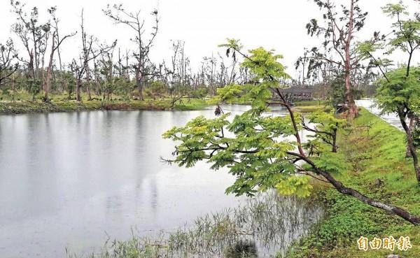 台東森林公園琵琶湖美麗依舊,湖畔的樹被颱風吹得更貼近水面。(記者黃明堂攝)