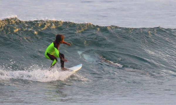 澳洲1名10歲男童日前到海灘衝浪,與一條鯊魚擦肩而過。(美聯社)