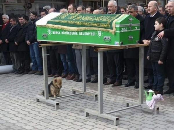 土耳其忠狗Cesur,在飼主伊漢(Mehmet Ilhan)的喪禮上滿臉哀愁。(圖擷自《The Dodo》)