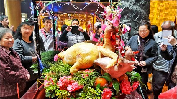 錫福宮今年元宵節會持續舉辦大閹雞比賽。(記者周敏鴻翻攝)