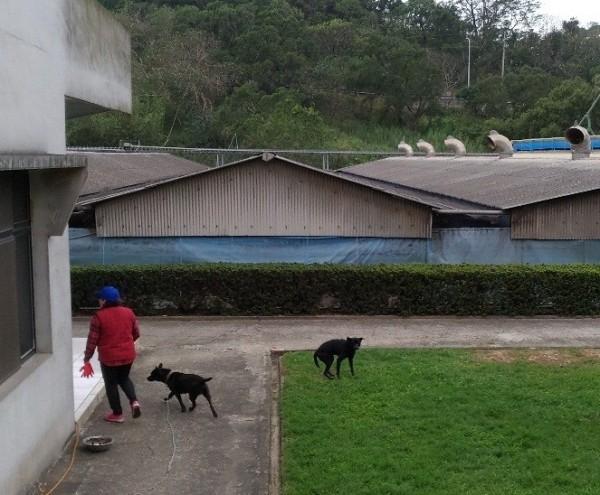 零安樂政策上路,流浪狗化身工作犬找新家。(苗栗縣政府提供)