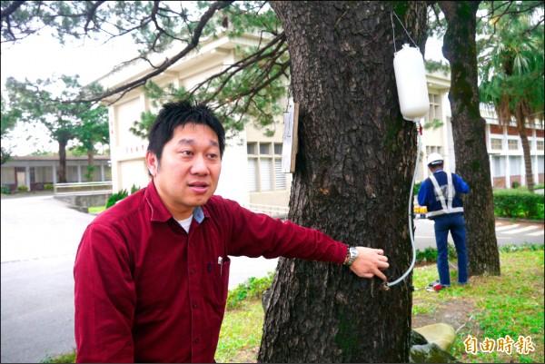 中華科技大學生物科技系助理教授胡寶元進行老松「松材線蟲萎凋病」防治處理。(記者王峻祺攝)