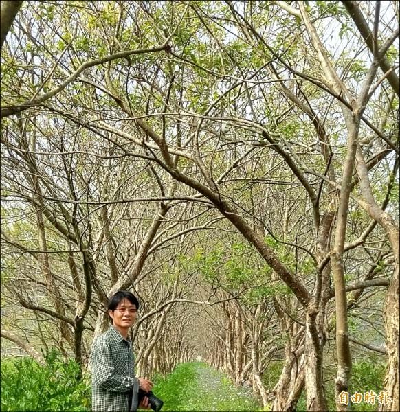 日月潭頭社復育水社柳已有八十萬棵規模,十年來不斷扦插復育,青年農民王順瑜功不可沒。(記者劉濱銓攝)