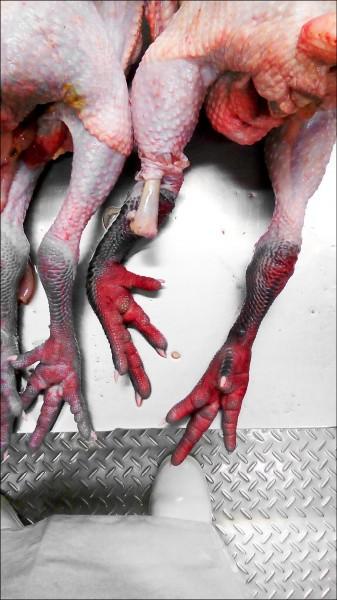 高雄市府攔截一批雲林土雞,腳脛、腳掌、胸部及大腿內側等體表部位,均呈現明顯潮紅現象,疑染禽流感送驗。 (記者陳文嬋翻攝)