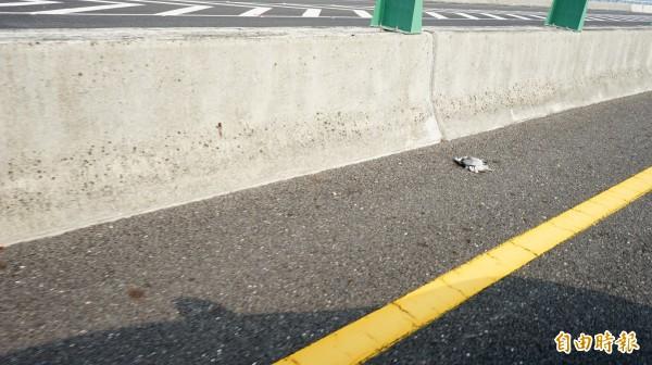 國道3末端可常見遭撞擊的鳥屍。(記者陳彥廷攝)