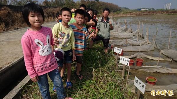 老師李榮宗(右一)帶學生在實驗田裡試種各種稻米品種。(記者楊金城攝)