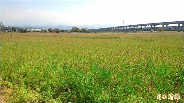 春耕將屆,讓用水更吃緊,苗栗農田水利會鼓勵農友辦理休耕,每公頃可領取4萬5千元補助。(記者彭健禮攝)