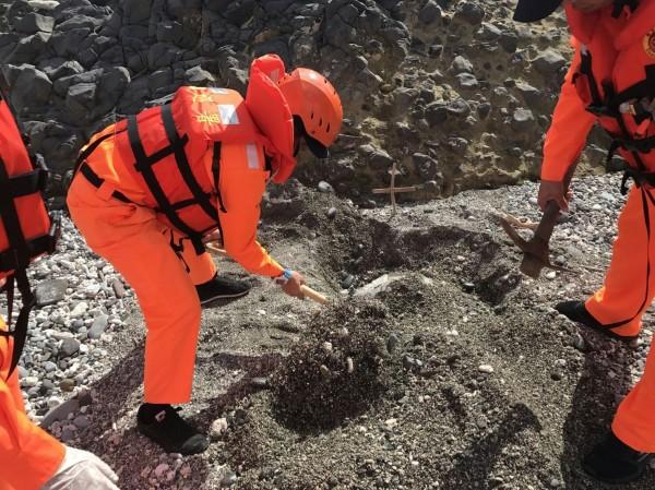 海巡人員將已死亡的綠蠵龜就地掩埋。(記者王秀亭翻攝)