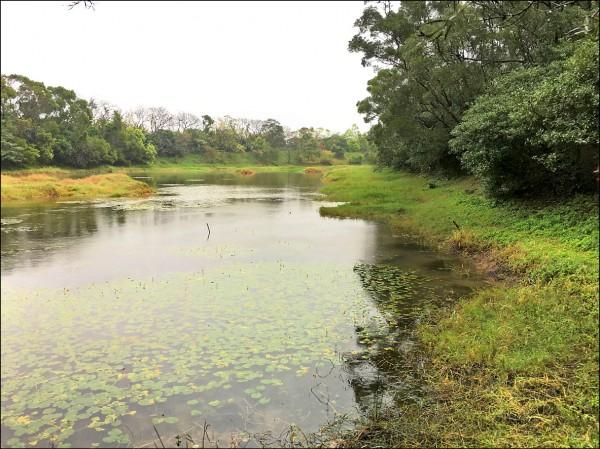 桃園楊梅「高榮野生動物保護區」擁有珍貴稀有物種「台北赤蛙」及多種珍稀植物。(記者周敏鴻攝)