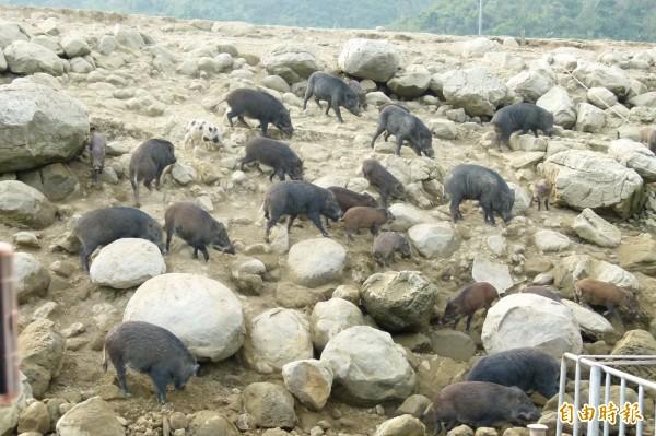 山豬島已經成為曾文水庫觀光熱點。(記者蔡宗勳攝)