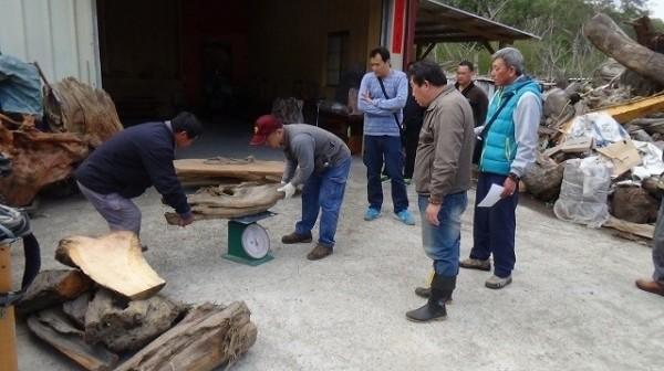 盜木集團在三義山區一處工寮裁切木材。(記者張軒哲翻攝)