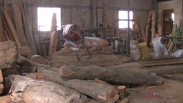 盜木集團自行在工寮加工裁切木頭。(記者張軒哲翻攝)