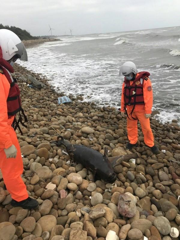 海巡署人員巡邏發現死亡江豚。(海巡署提供)
