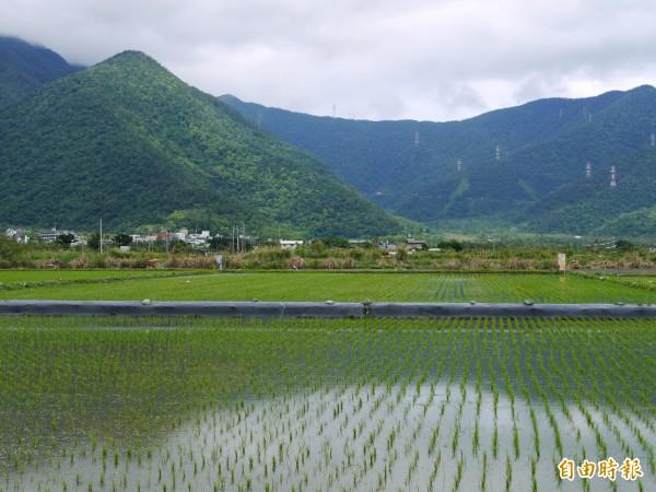 農委會今年將首度補助友善耕作農地,每年每公頃3萬元。(記者簡惠茹攝)