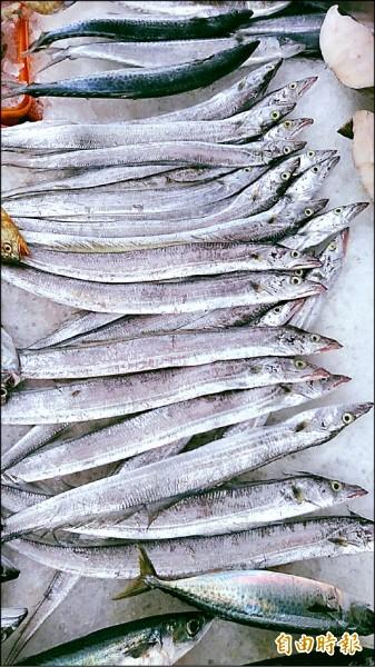 通苑地區這個季節的白帶魚捕獲量慘跌。(記者蔡政珉攝)