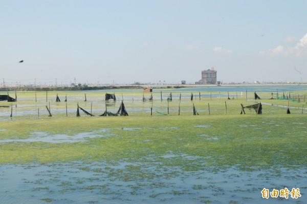 雲林縣政府積極推動將台西養殖專區轉型為綠能專區。(記者林國賢攝)