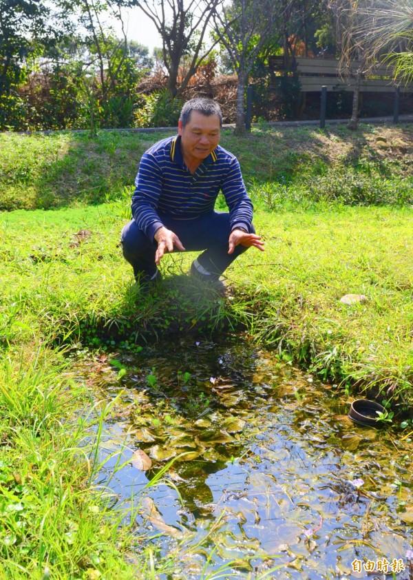 吳聲昱是水生植物專家,也自己在龍潭打造一片「綠野仙蹤」。(記者陳昀攝)