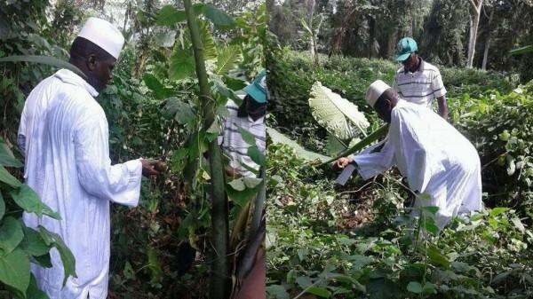 甘比亞前總統賈梅被放逐國外後決心不再碰政治,轉行當起了菜農。(圖擷取自非洲新聞網)