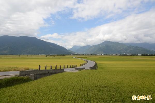 前年宣布退出全國米賽,池上鄉今年重返「106年臺灣稻米達人冠軍賽」。(記者陳賢義攝)