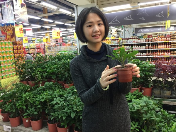 頭份大潤發表示,各種植物小盆栽近年很受民眾喜愛。(記者許展溢翻攝)