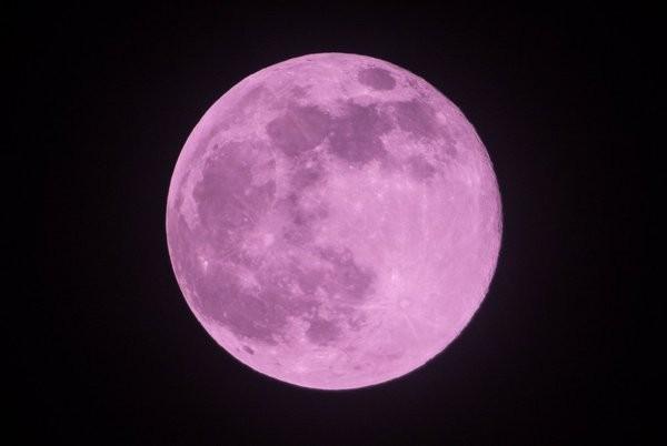據傳粉紅色月亮降臨的那天,戀愛運會一直上升,因此是個適合表白的時機。(圖擷自推特)