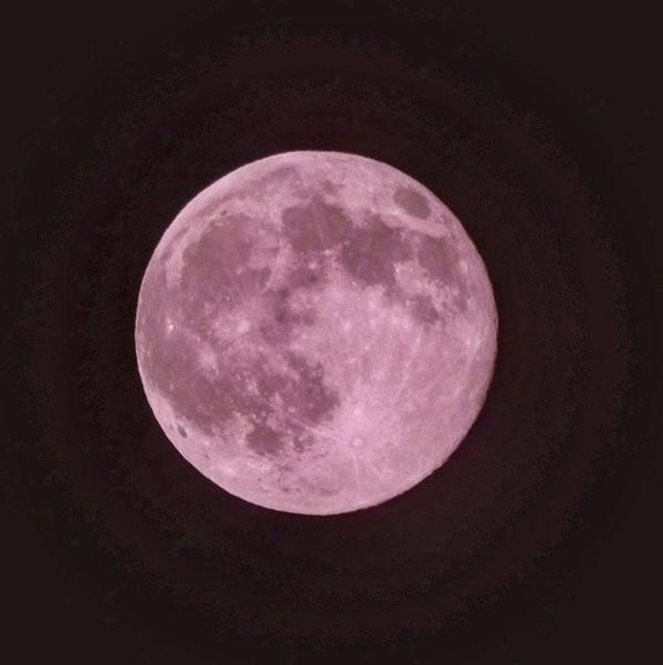 去年的粉紅月亮。(圖擷自推特)