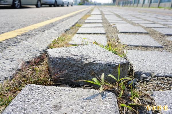 部分植草磚和路面落差10公分以上,下雨積水、高低差都容易造成行車危險、車輛損壞。(記者何宗翰攝)