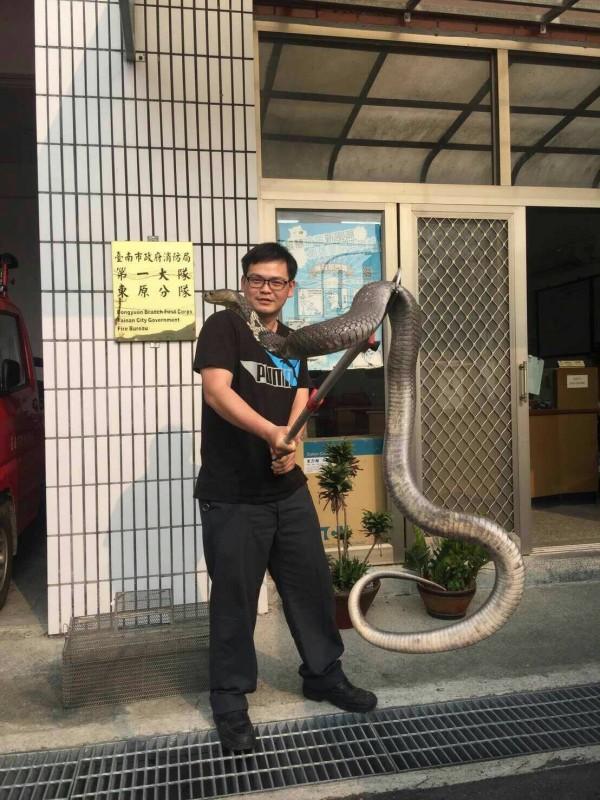網路流傳一張南市消防局東原分隊抓到大蛇的照片,消防隊員雙手持棍撐住蛇身,蛇頭掛在肩上,煞是驚人。(記者王涵翻攝)