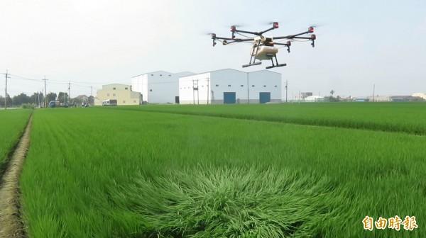 無人機空中噴藥大大節省農村人力及成本。(記者廖淑玲攝)