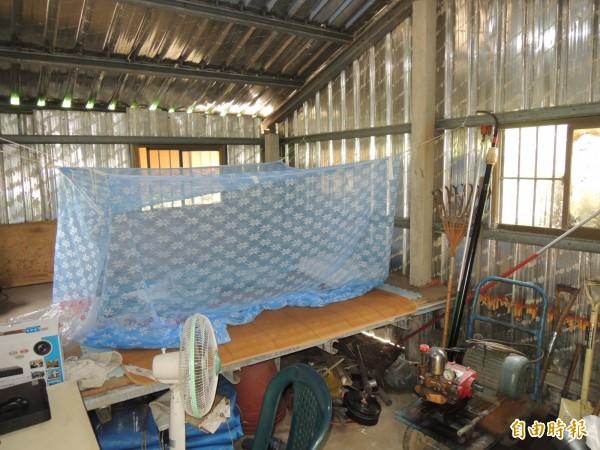 農民為防止檳榔被偷割,忍受酷熱睡在工寮,徹夜守護心血。(記者李立法攝)