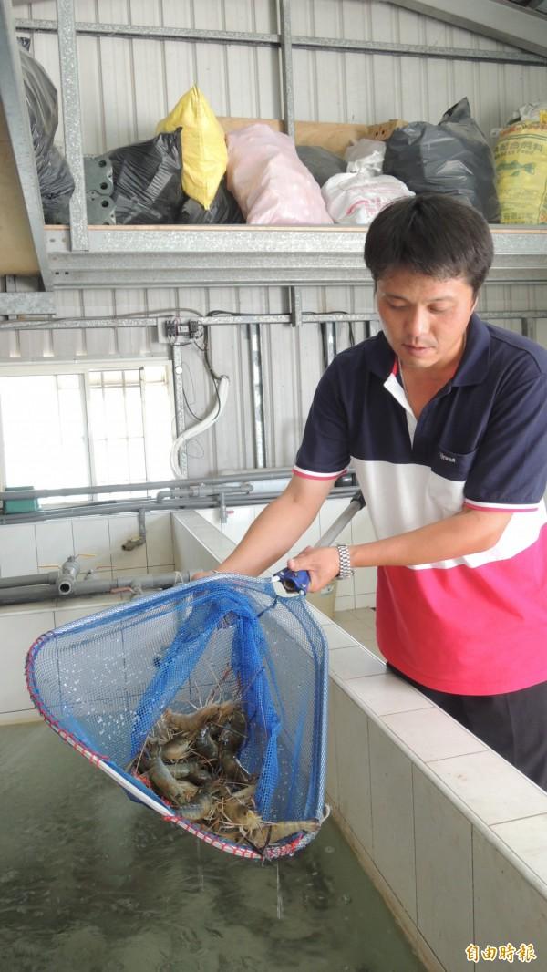 李耀南飼養泰國蝦,現撈現煮。(記者羅欣貞攝)