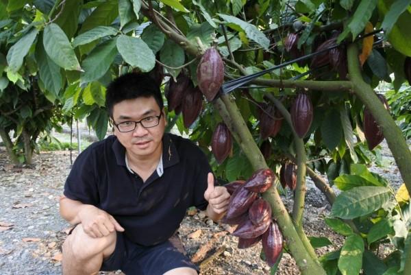 陳信宏畢業自園藝系,所種可可生長情況良好。(記者羅欣貞翻攝)