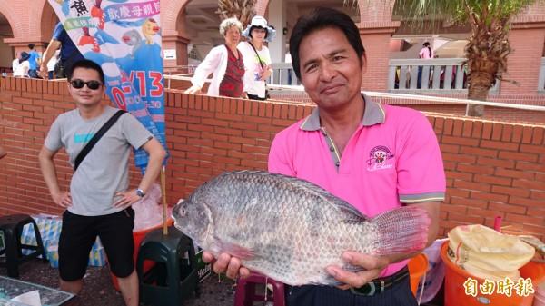 巨無霸台灣鯛每尾重達5台斤以上。(記者楊金城攝)