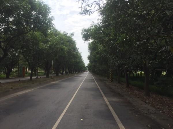 柳營太康綠隧芒果樹今年已招標採收,警方提醒民眾勿任意採摘,以免觸法。(記者王涵平翻攝)