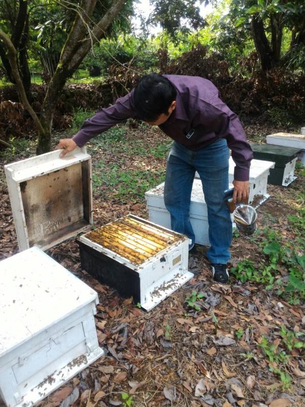 氣候影響花季延,蜂蜜產量大量減少,不過蜂農質疑年初才剛核准延伸使用作為荔枝椿象防治藥劑「益達胺」等類尼古丁藥劑,也是導致「養蜂產業」重創原因之一。(防檢局提供)