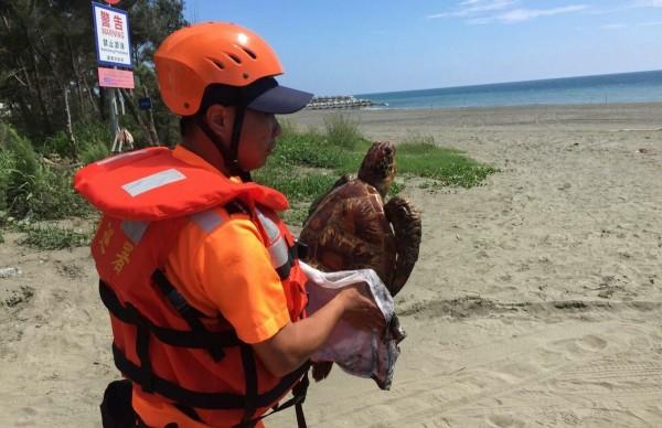 台南岸巡5月23日發現1隻死亡的綠蠵龜。(資料照,記者楊金城翻攝)