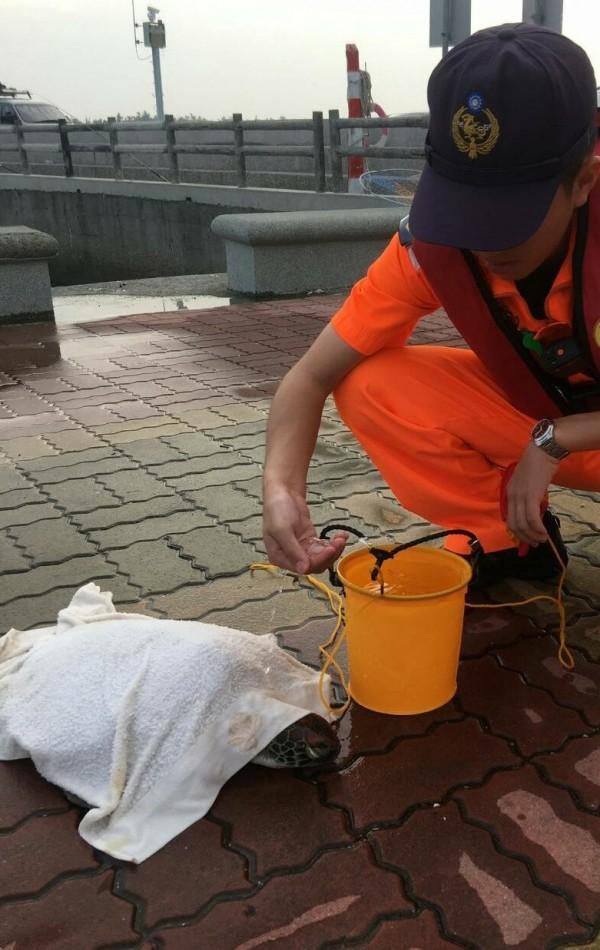 海巡署台南第11岸巡總隊隊員為綠蠵龜披上濕毛巾並淋水保濕,小心照顧。(記者楊金城翻攝)