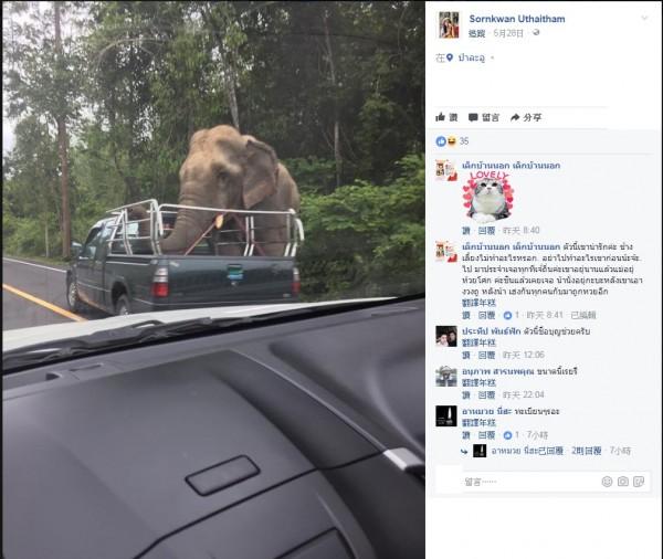 泰國有網友拍下野象當街攔車搶鳳梨的畫面。(圖擷取自臉書)