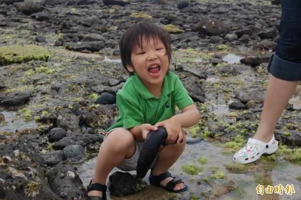 原本澎湖潮間帶處處可見海參,今年卻突然消失蹤影。(記者劉禹慶攝)