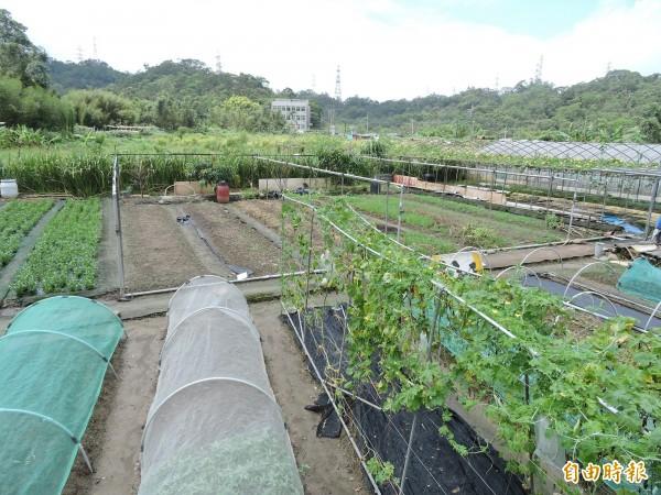 農委會補助農民施用有機肥料,第1階段期限至6月30日。(資料照,記者賴筱桐攝)